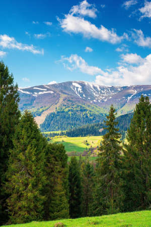 mountain landscape in springtime on a sunny day. trees on the grassy meadow. fluffy clouds above the distant ridge. beautiful scenery of carpathian borzhava ridge Stock Photo
