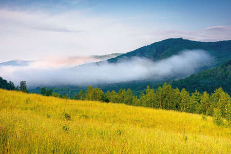 grassy meadow in mountains. fog rolling through the valley above the distant forest. beautiful rural landscape on the summer morning. sunny weather with blue sky Stock Photo
