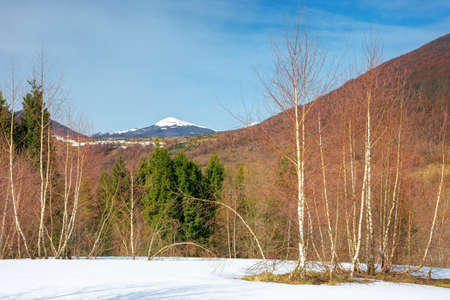 trees on the snow covered meadow in mountains. beautiful winter scenery of uzhanian natural park, ukraine on a sunny day Stock Photo