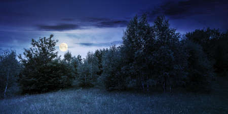 trees on the hill in summer scenery at night. beautiful mountain landscape in full moon light Stock Photo