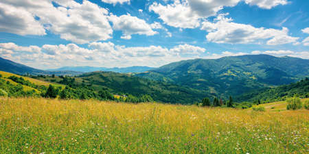 rural landscape with blooming grassy meadow. beautiful nature scenery of carpathian mountains on a sunny day. fluffy clouds on the blue sky Stock Photo