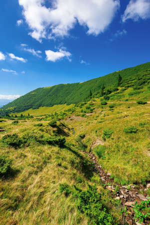 mountain landscape on a summer day. trees on the grassy hill. scenery rolling down the valley in to the distant view. blue sky with fluffy clouds above the black ridge. wonderful adventures in carpathians