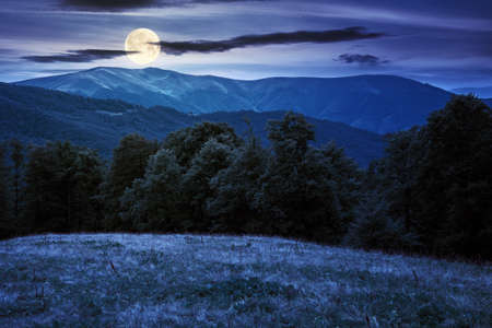 beech trees on the grassy hill at night. beautiful nature scenery in mountains. carpathian summer landscape in full moon light