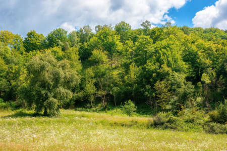 beech forest on the hill. beautiful nature landscape in mountain on a sunny day Stock Photo