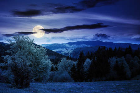 forest on the grassy meadow in mountains at night. beautiful countryside landscape in full moon light. clouds on the blue sky above the distant borzhava ridge. spring adventures in carpathians