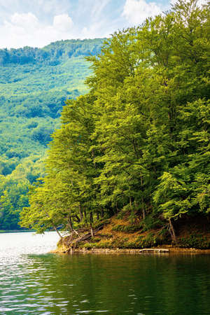 lake among beech forest in summer. beautiful nature landscape in mountains. vihorlat national park on a sunny day.