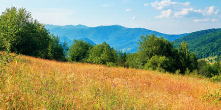 rural field in mountains. beautiful summer landscape of carpathian countryside. trees on the hill, forested ridge in the distance beneath a blue sky with clouds.