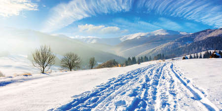 mountainous rural landscape in wintertime. snow capped peak in the distance. wonderful sunny scenery in carpathian mountains. country road through snow covered field, leafless on the hillside