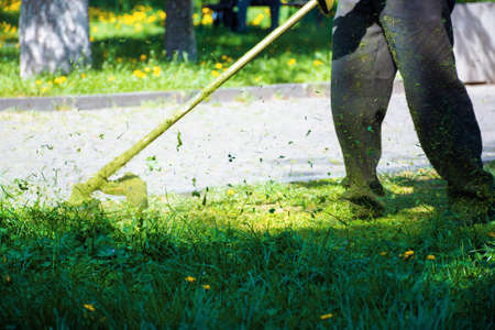 cutting lush green grass in the park. beautiful nature background. lawn care work in progress concept. brush cutter tool used to maintain gardens and outdoors Stock Photo