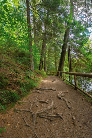 trail through forest in summertime. trees an fence along the path. roots stick from the ground. nature travel concept, explore the wilderness