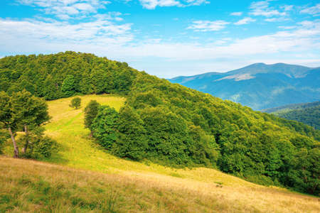 forest and meadow on the hill. beautiful carpathian mountain landscape in summer. Blyznytsya peak in the distance. wonderful sunny weather with clouds on the sky Stock Photo