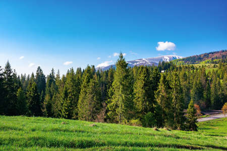 countryside landscape in the morning. beautiful mountain landscape in springtime. sunny weather with fluffy clouds. snow on the summit in the distance Stock Photo