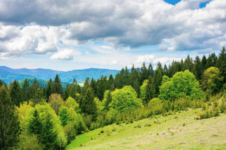 forest on the grassy meadow in mountains. beautiful countryside landscape on a sunny day. clouds on the blue sky above the distant borzhava ridge. spring adventures in carpathians