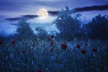 at night in full moon light
