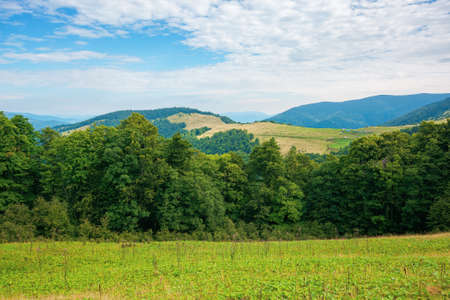 summer landscape of carpathian mountains. beautiful scenery in the morning. beech forest and grassy alpine meadows on the hills of chornohora ridge. bright sunny weather with fluffy clouds on the sky Stock Photo