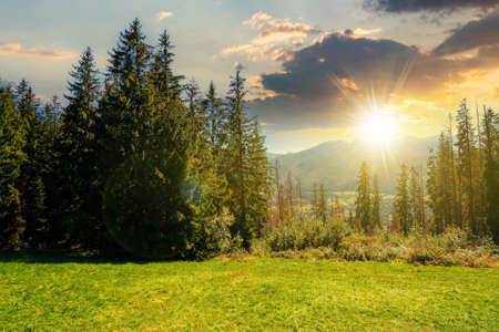 rural landscape in tatra mountains at sunset. spruce trees on the green grassy meadow of gubalowka range. beautiful nature scenery in evening light. clouds above the distant ridge Stock Photo