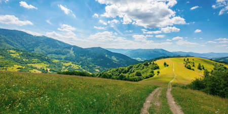 road through pasture on the hill in summer. beautiful rural landscape of carpathian mountains on a sunny day. wonderful summer weather with fluffy clouds on the sky