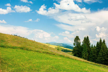 forest on the grassy meadow in mountains. beautiful countryside landscape on a sunny day. fluffy clouds on the blue sky above the distant borzhava ridge. summer adventures in carpathians Stock Photo