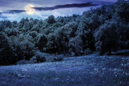beech forest on the hill at night. beautiful nature landscape in mountain in full moon light