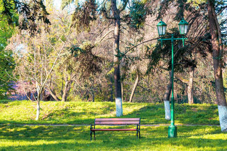 city park in early spring. bench on the grassy lawn in the shadow of the trees in front of the footpath. beautiful urban nature scenery on a sunny day