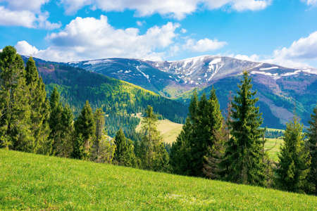 mountain landscape on a sunny day. beautiful alpine countryside scenery with spruce trees. grassy meadow on the hill rolling down in to the distant valley. clouds on the blue sky Stock Photo