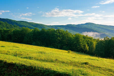 mountain meadow in morning light. countryside springtime landscape with valley in fog behind the forest on the grassy hill. fluffy clouds on a bright blue sky. nature freshness concept Stock Photo