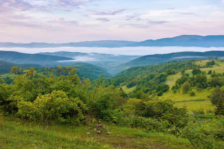 mountainous countryside scenery at dawn. distant valley full of fog in summer. plants and trees on the hill. beautiful landscape with clouds on the sky