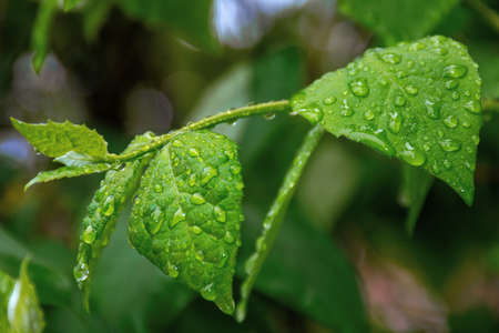 water drops on the green leaves. beautiful close up nature background. freshness concept Stock Photo