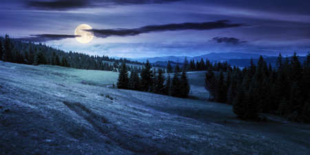coniferous forests in mountains at night. summer landscape with grass on the hills. nature scenery in full moon light with clouds on the sky
