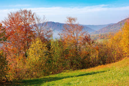 mountainous rural landscape in autumn. trees the edge of a hill in colorful foliage. sunny day with bright blue sky Stock Photo