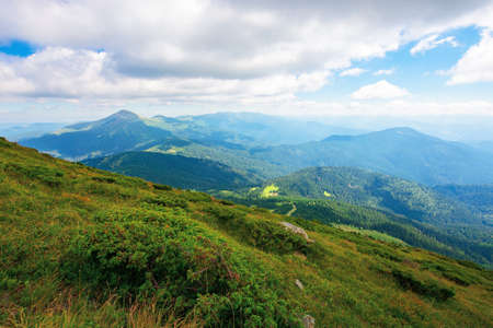 hoverla peak of carpathian black ridge. beautiful summer landscape at noon. clouds on the sky above the valley. view from petros mountain slope covered in grass