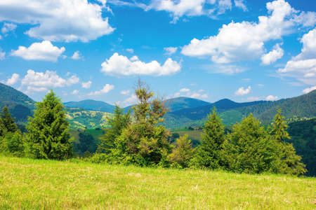 rural landscape in carpathian mountains. summer nature scenery with trees on the meadow. fluffy clouds on the bright blue sky. beautiful view in to the distant hills and valley