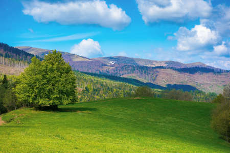 tree on the meadow in mountains. beautiful nature landscape on a sunny day in spring. fluffy clouds on the blue sky above the distant range