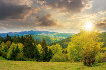 forest on the grassy meadow in mountains at sunset. beautiful countryside landscape in evening light. clouds on the blue sky above the distant borzhava ridge. spring adventures in carpathians