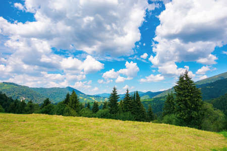 summer landscape in carpathian mountains. beautiful nature scenery with trees on the grassy meadow. fluffy clouds on the bright blue sky. wonderful travel destination of ukraine