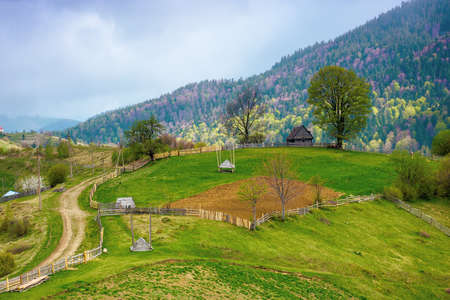 rural landscape of carpathian mountains. fields and trees on rolling hills. ukrainian village in countryside. spring scenery in dappled light