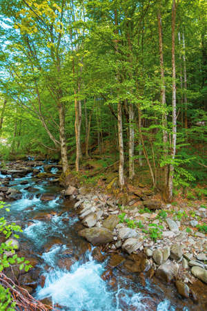 mountain river runs through forest. summer nature scenery on a sunny day. rapid water flows among the rocks. trees on the shore in lush green foliage