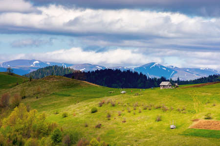 rural fields on rolling hills in springtime. borzhava mountain ridge in the distance. carpathian landscape of ukraine. area of synevy national park. nature scenery in dappled light Stock Photo