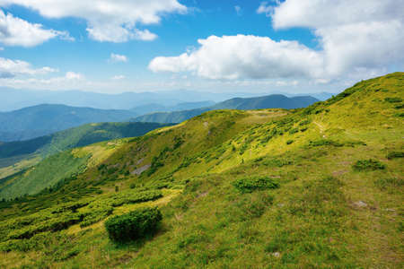 hills of the mountain rolling in to the distance. summer landscape of the black ridge in the eastern carpathians, ukraine. sunny scenery with fluffy clouds on the blue sky