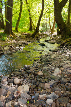 wild water stream in the forest. beautiful nature scenery on a sunny spring day. trees in vivid green foliage. stones on the shore. freshness of nature concept Stock Photo