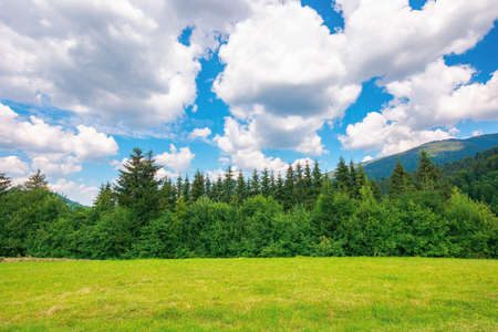 mountainous rural landscape in summertime. trees on the hillside meadow. clouds on the blue sky above the distant ridge. countryside adventures on a sunny day