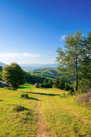 mountainous rural area in the morning. beautiful remote agricultural landscape in summer. trees and grassy fields on rolling hills Stock Photo