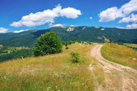 road through meadow in mountains. beautiful rural landscape of carpathians on a sunny day. wonderful summer weather with fluffy clouds on the sky