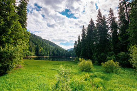 mountain lake landscape in summer. beautiful scenery of synevyr national park, ukraine. body of water among the forest. great view and amazing attarction of carpathian nature. travel europe concept