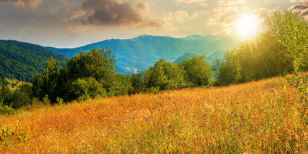 rural field in mountains at sunset. beautiful summer landscape of carpathian countryside in evening light. trees on the hill, forested ridge in the distance beneath a blue sky with clouds.