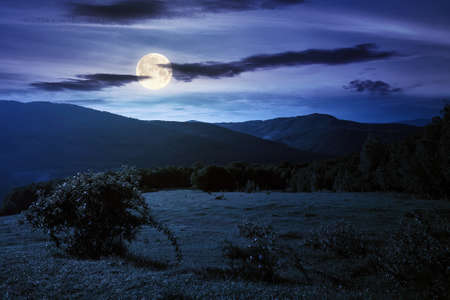 green grass on the meadow in mountains at night. summer carpathian countryside in full moon light. rosebush on the hill. beech forest in the distance. clouds on the blue sky