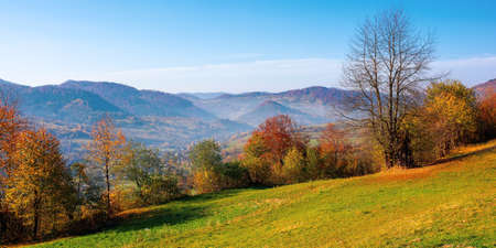 mountainous rural scenery in fall season. trees the hill in colorful foliage. village in the distant valley. sunny day with bright blue sky. traditional carpathian countryside of ukraine