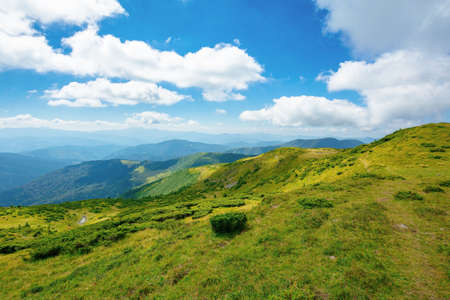 Carpathian Biosphere Reserve mountain ridge. green meadows summer landscape of the Chornohirskyi Massif in the eastern carpathians, ukraine. sunny scenery with fluffy clouds on the blue sky