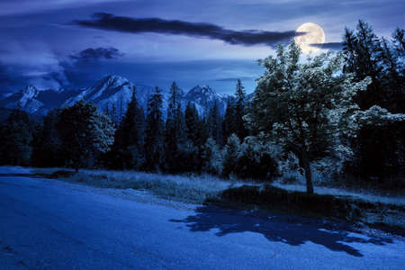 asphalt road through forested mountains at night. beautiful countryside transportation background. composite summer landscape with high tatra ridge in the distance in full moon light Stock Photo