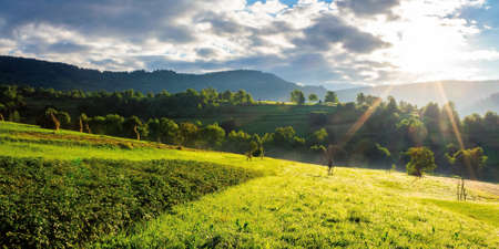 rural fields in the morning light. wonderful mountainous countryside scenery with grassy hills in summer